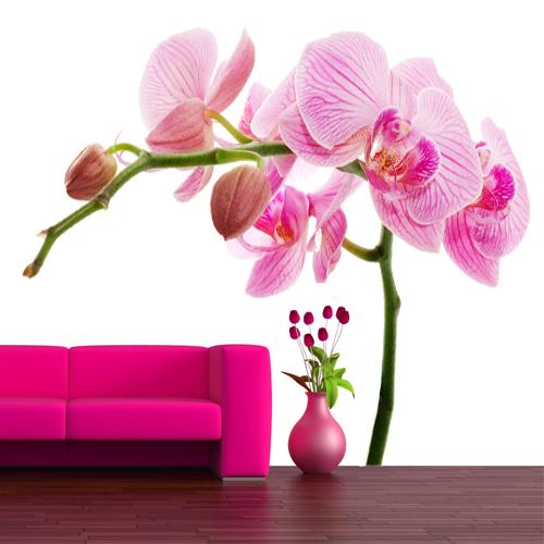 wandtattoos folies wandtattoo orchidee On wandtattoo orchidee