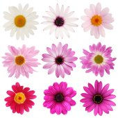 Wandsticker Blumen Set